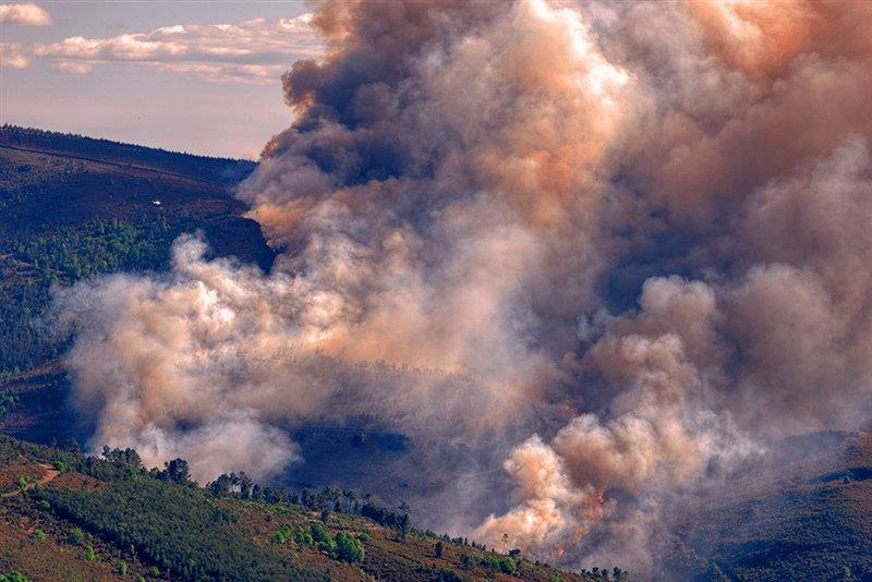 What will be the economic impact of the 2020 bushfires?